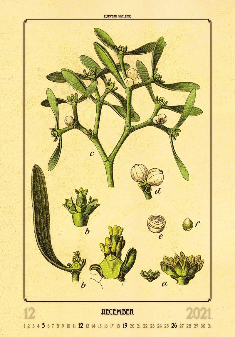 Kalendarz ścienny wieloplanszowy Herbarium 2021 - grudzień 2021
