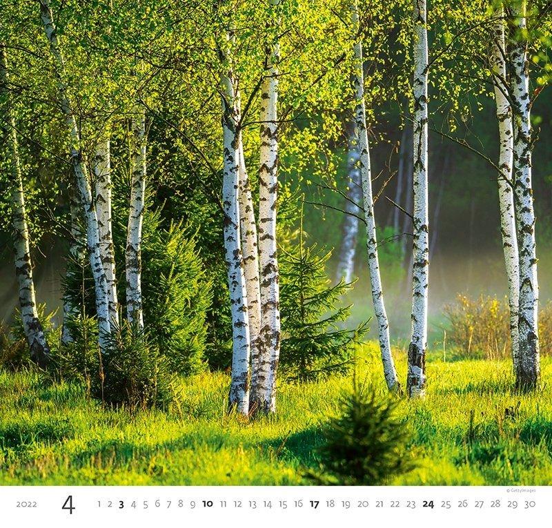 Kalendarz ścienny wieloplanszowy Forest 2022 - kwiecień 2022