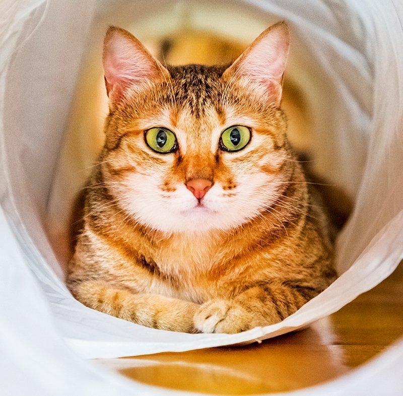 Kalendarz ścienny wieloplanszowy Cats 2022 z naklejkami - czerwiec 2022