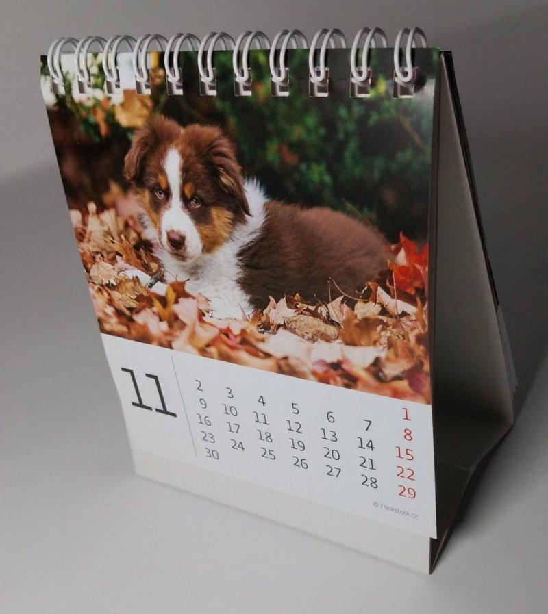 Kalendarz biurkowy mini Pieski 2020 - listopad 2020