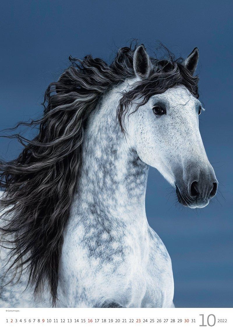 Kalendarz ścienny wieloplanszowy Horses Dreaming 2022 - październik 2022