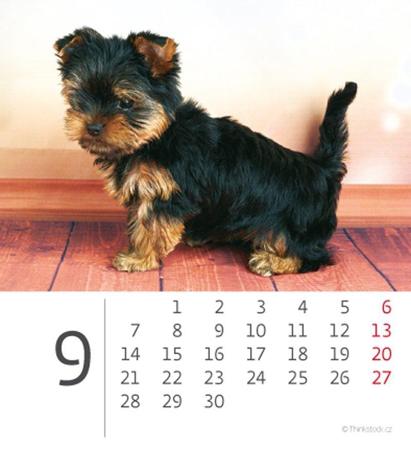 Kalendarz biurkowy mini Pieski 2020 - wrzesień