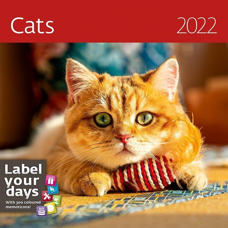 Kalendarz ścienny wieloplanszowy Cats 2022 z naklejkami - okładka 2022