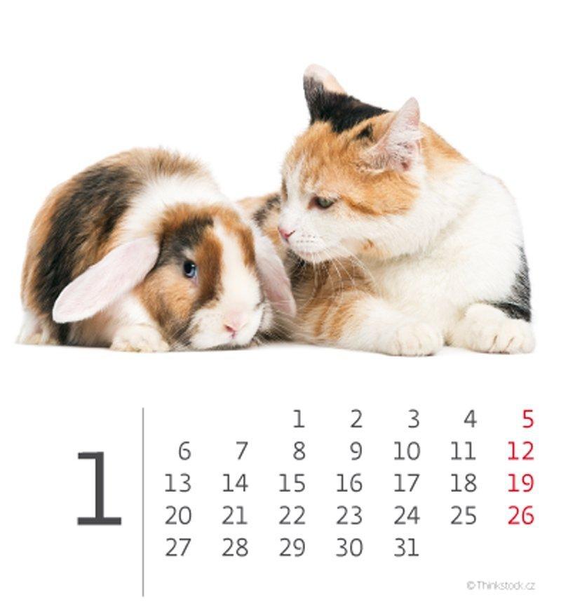 Kalendarz biurkowy mini Zwierzątka 2020 - styczeń