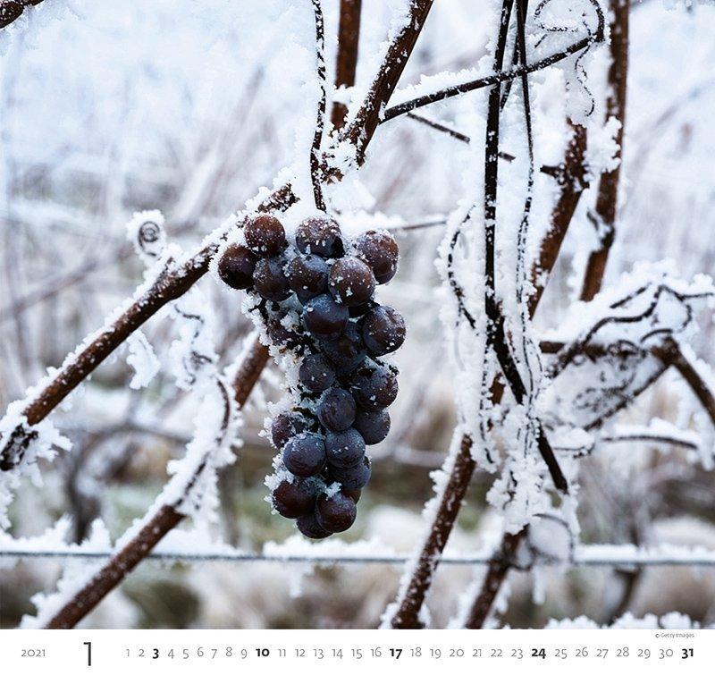 Kalendarz ścienny wieloplanszowy Wine 2021 - styczeń 2021