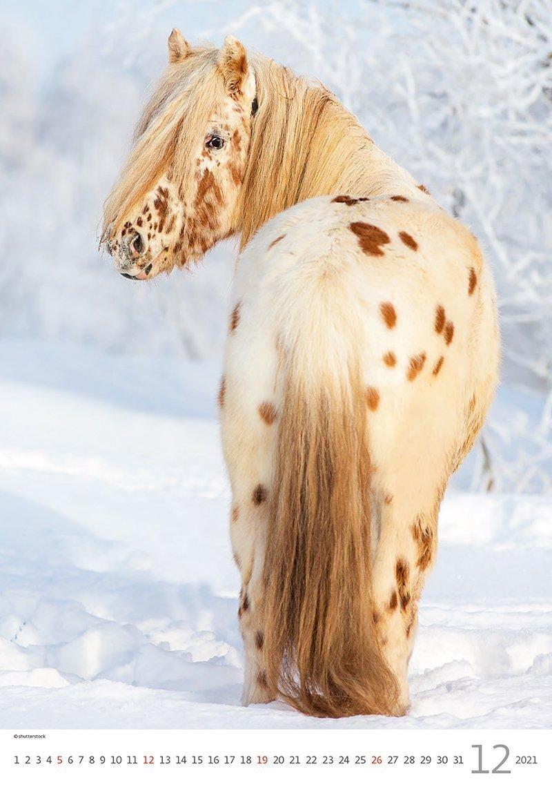 Kalendarz ścienny wieloplanszowy Horses Dreaming 2021 - grudzień 2021