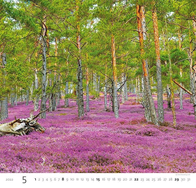 Kalendarz ścienny wieloplanszowy Forest 2022 - maj 2022