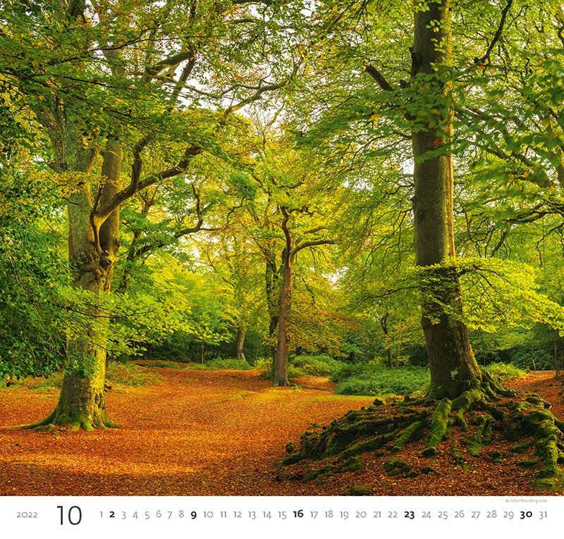 Kalendarz ścienny wieloplanszowy Forest 2022 - październik 2022