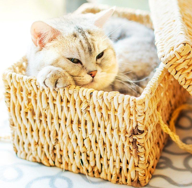 Kalendarz ścienny wieloplanszowy Cats 2022 z naklejkami - kwiecień 2022
