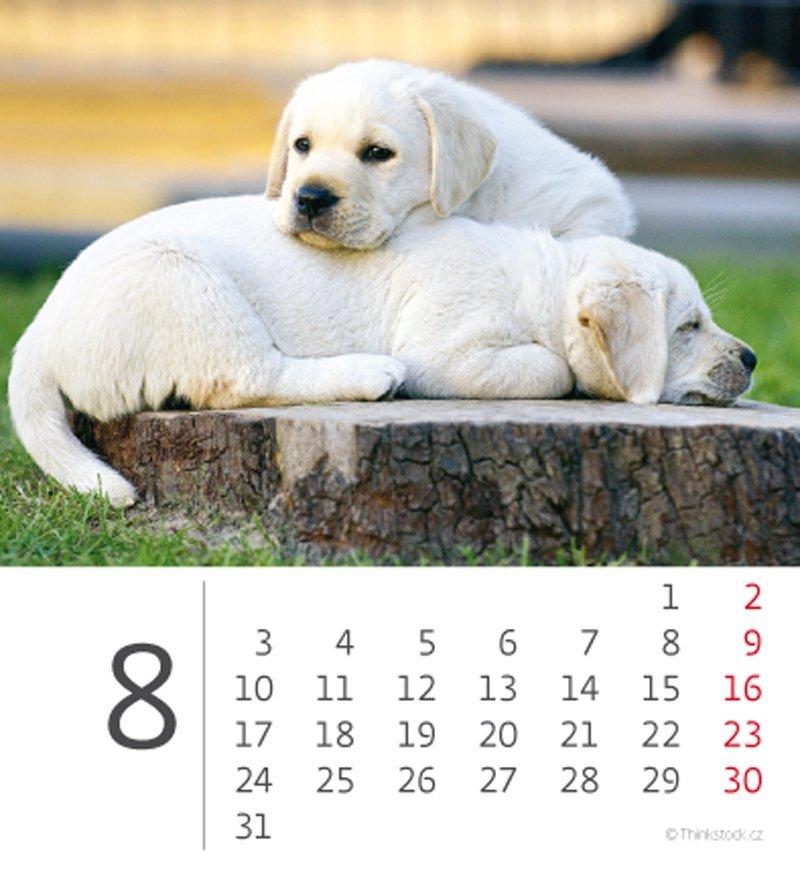 Kalendarz biurkowy mini Pieski 2020 - sierpień