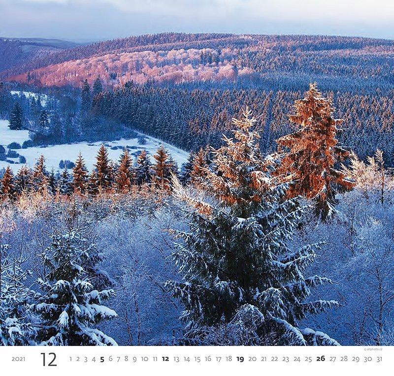 Kalendarz ścienny wieloplanszowy Forest 2021 - grudzień 2021