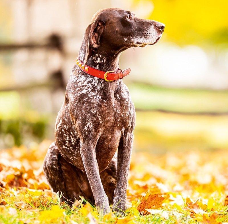 Kalendarz ścienny wieloplanszowy Dogs 2022 z naklejkami - listopad 2022