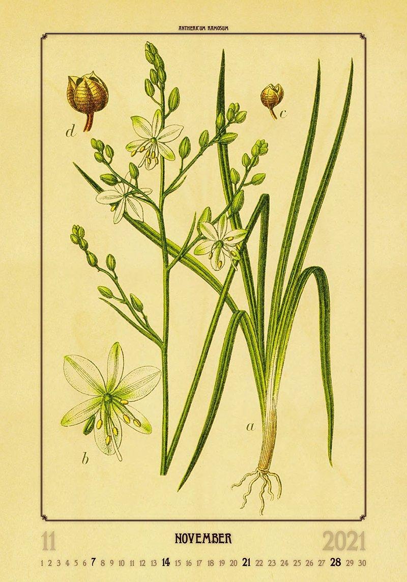 Kalendarz ścienny wieloplanszowy Herbarium 2021 - listopad 2021