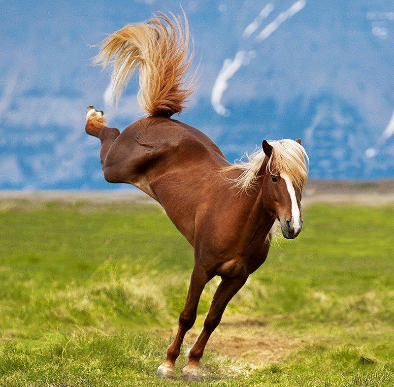 Kalendarz ścienny wieloplanszowy Horses 2022 z naklejkami - marzec 2022