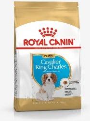 Royal 257440 Cavalier King Charles Puppy 1,5kg