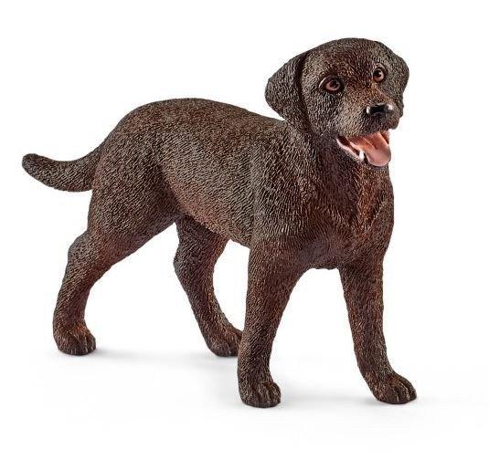 Labrador Retriever Suczka