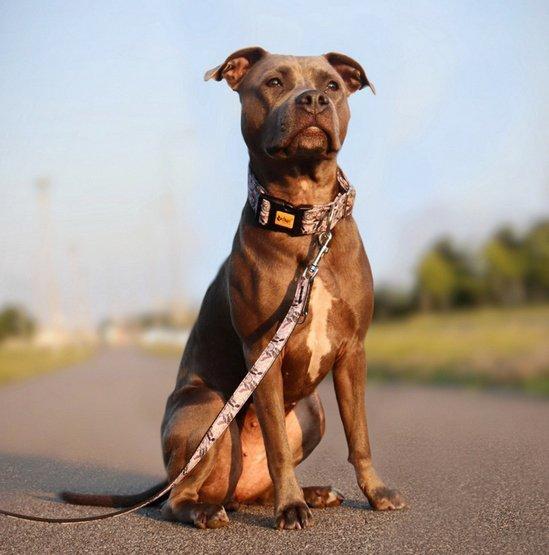 Dingo Obroża regulowana America Georgia 4,0cm/75cm