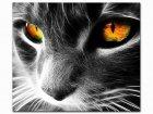 Obraz Malowanie po numerach Czarny Kot z kolorowymi oczami S078