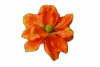 Magnolia wyrobowa - YSLT1709H