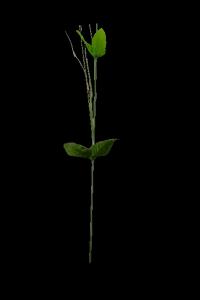 Łodyga z trawką 45 cm