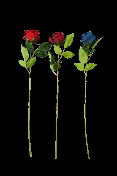 Róża  MIX