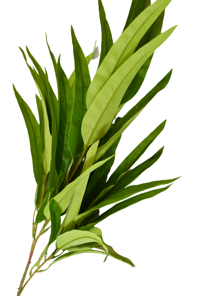 Gałązka bambusa