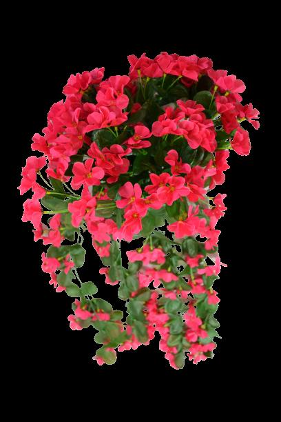 Fiołek kwitnący zwisający MIX