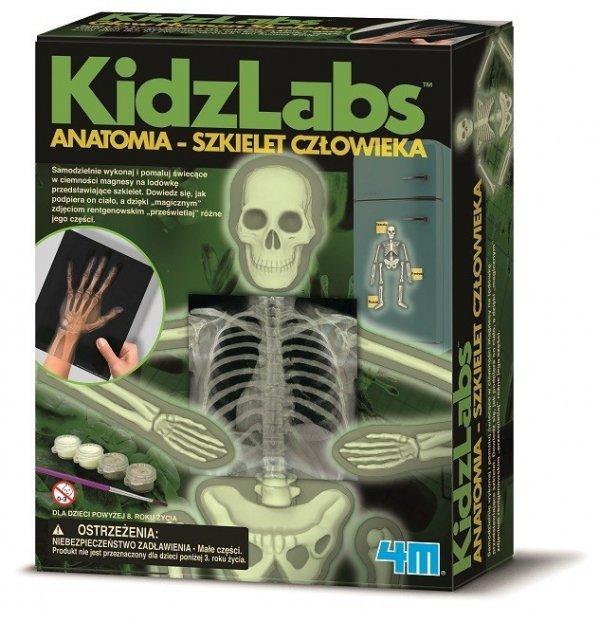 Anatomia szkielet człowieka