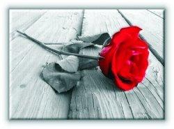 Róża na Pomoście - Obraz na płótnie