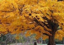 Beautiful Fall Color Tree - fototapeta