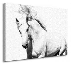 Arabski Koń - Obraz na płótnie
