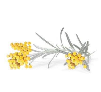 NIKEL, Bogaty krem odżywczy z wyciągiem z kwiatu Immortelle, 50ml