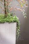 Blumentopf Blumenkübel Ratto Square 325 weiß