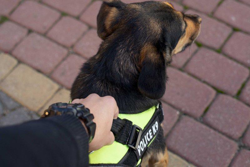 Szelki dla psa mocne L 65-80cm Police K9 zielone