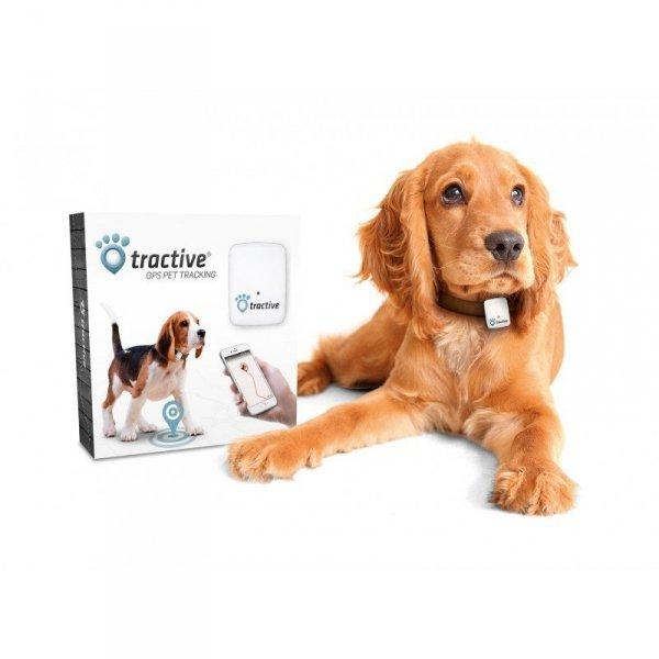 Tractive - lokalizator GPS dla zwierząt domowych