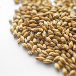 Słód piwowarski pilzneński 1 kg