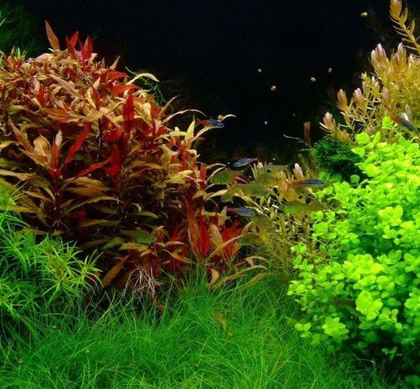 Aquabotanique Planta Activ Potas 200Ml Najlepszy