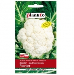 Kalafior wczesny PIONIER nasiona warzyw 1g