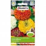 CYNIA wytworna daliowa MIX nasiona kwiatów 1g