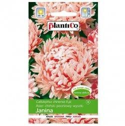 ASTER chiński PEONIOWY JANINA nasiona kwiatów 1g