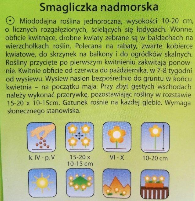 Smagliczka nadmorska fioletowa nasiona Plantico