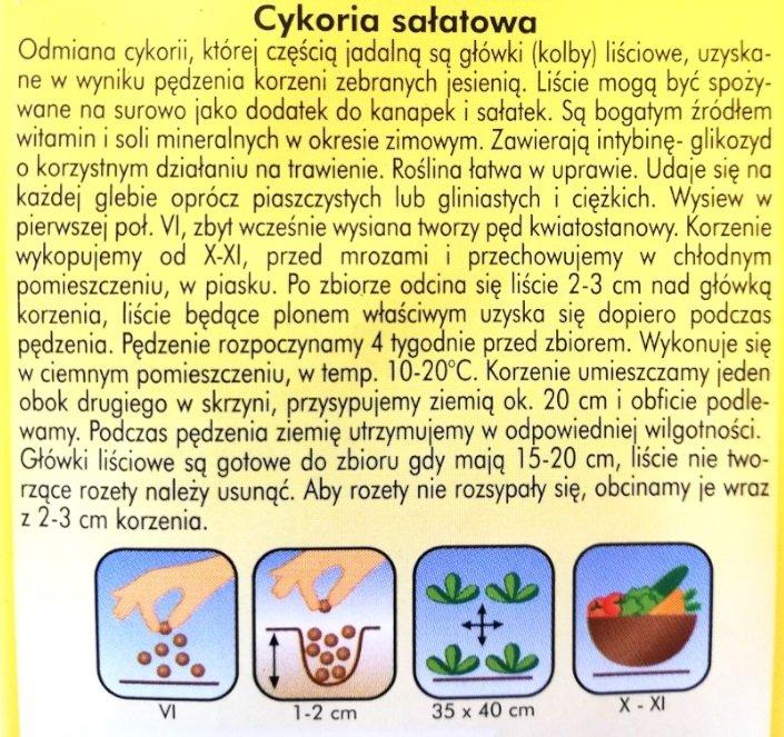 Cykoria sałatowa nasiona PLantico