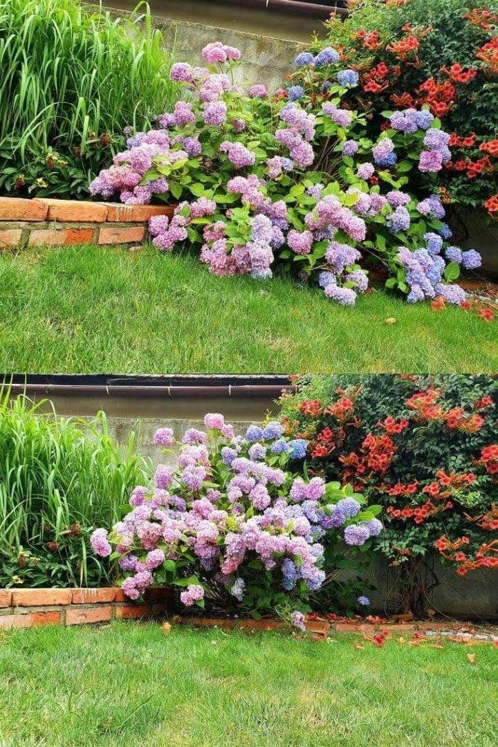 Podpora RING do kwiatów krzewów roślin 21cm