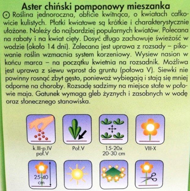 Aster chiński pomponowy - mieszanka Plantico