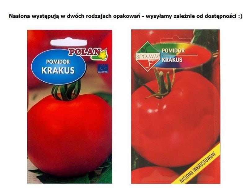 Pomidor Krakus