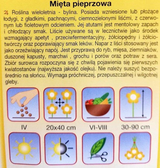 Mięta pieprzowa nasiona Plantico