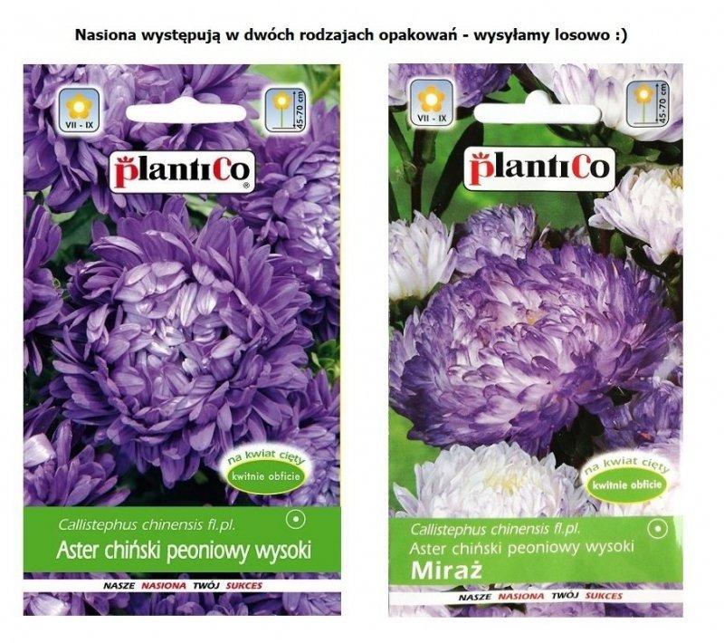 ASTER PEONIOWY wysoki FIOLETOWY nasiona kwiatów 1g