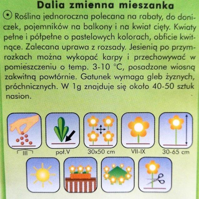 Dalia zmienna mix nasiona Plantico