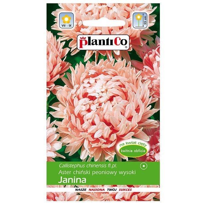 Aster Janina nasiona
