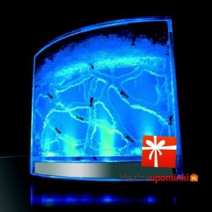 Akwarium dla mrówek - podświetlane LED